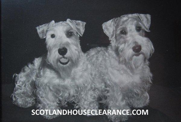 Antique Photograph Scottish Terriers